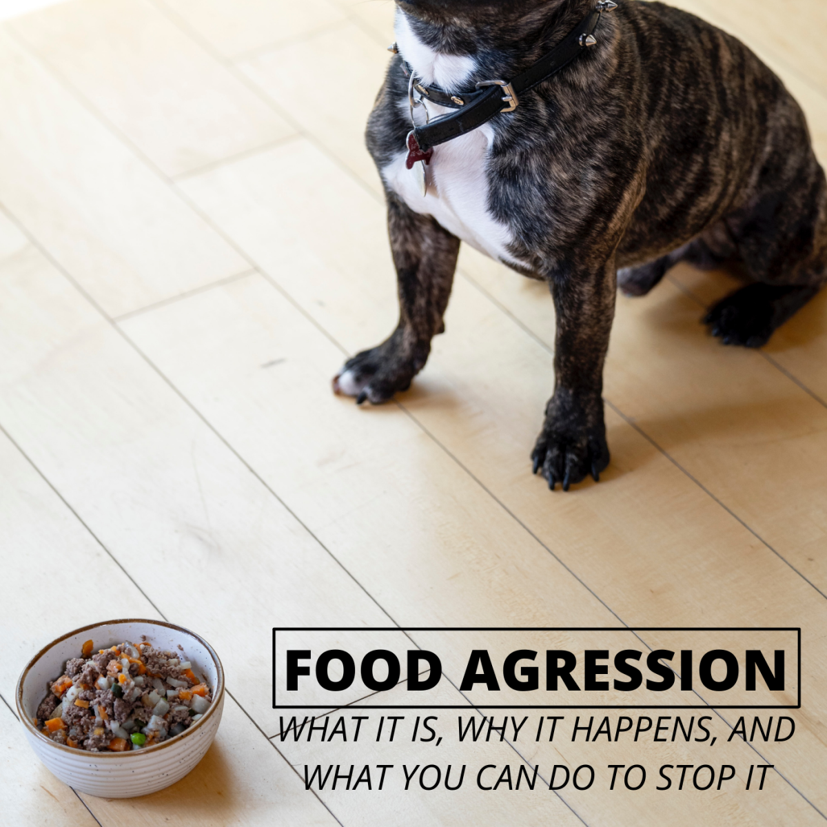 Does your dog become protective and aggressive around their food?