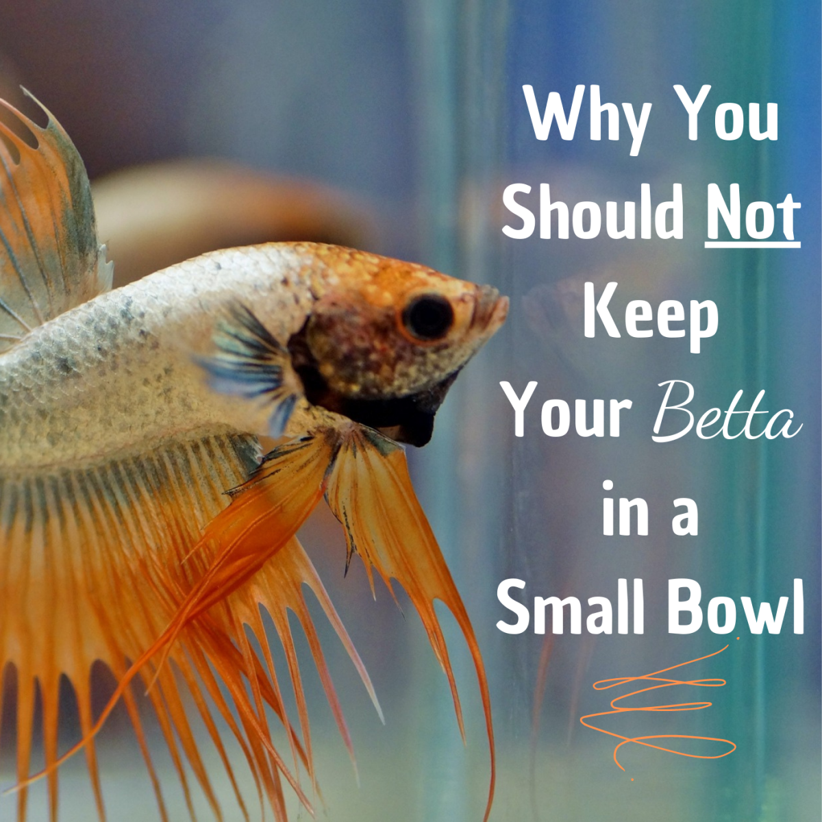 A small bowl is an insufficient habitat for a betta fish. Learn more about setting up an appropriate, healthy habitat for your betta.