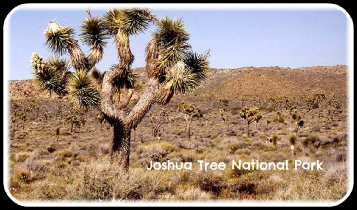 Joshua Tree National Park in California...Bearing a Biblical Reference