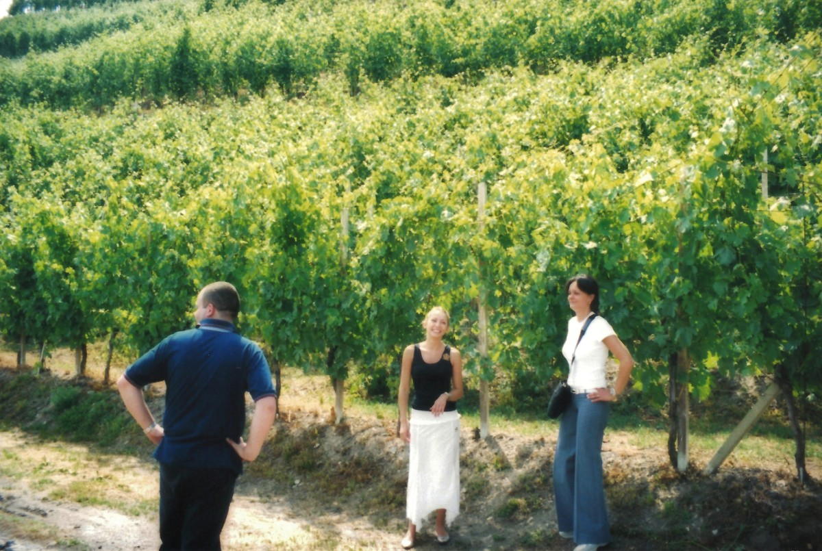 In the vineyards...