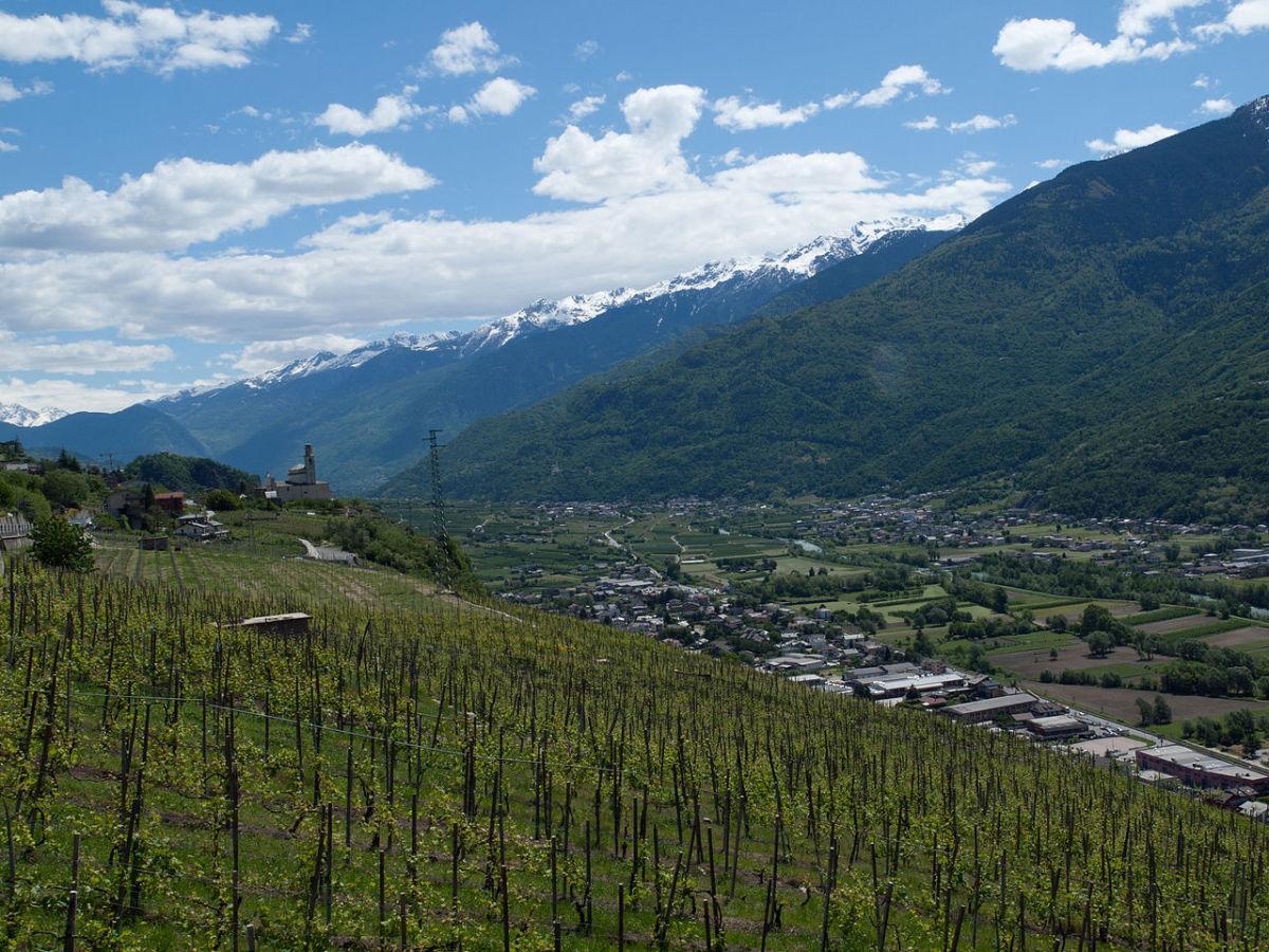 Vineyards in the Italian wine region of Valtellina in Lombardy