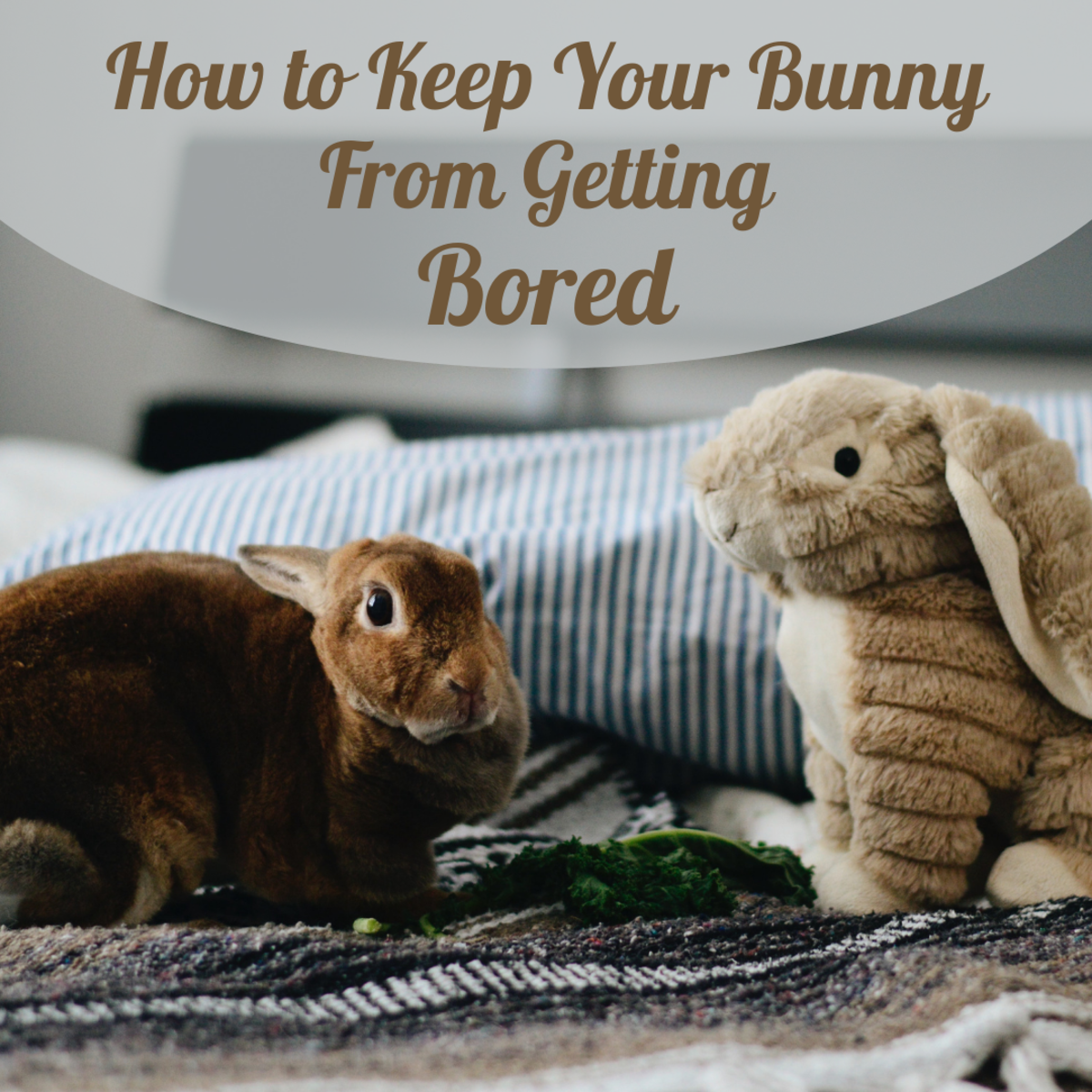 The Bored Bunny: How to Entertain Your Rabbit