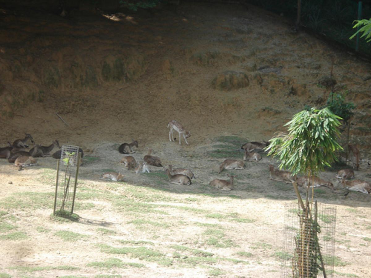 kuala-lumpur-mouse-deer-park