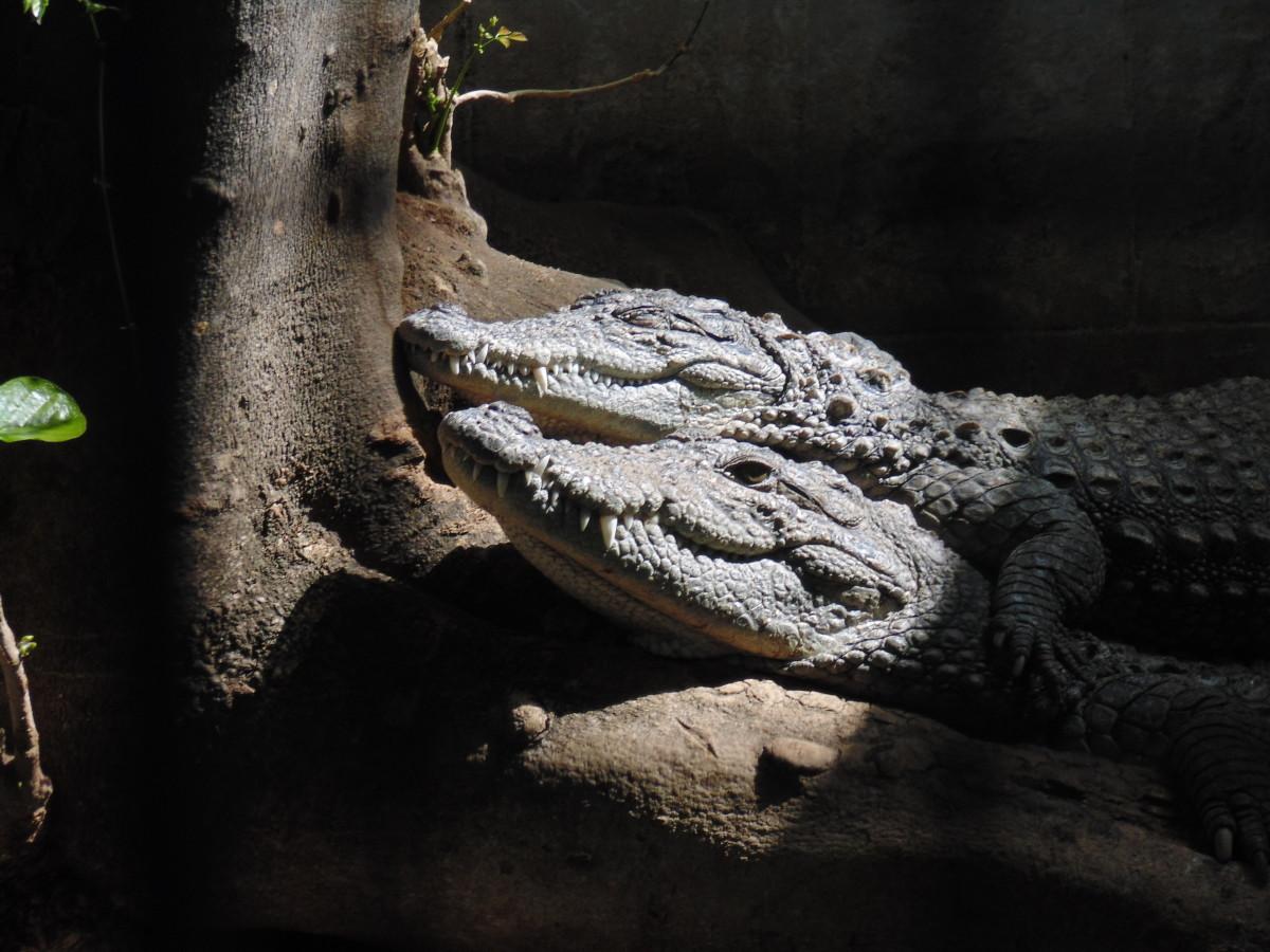 Hogenakkal's Crocodile Park is a must-see.