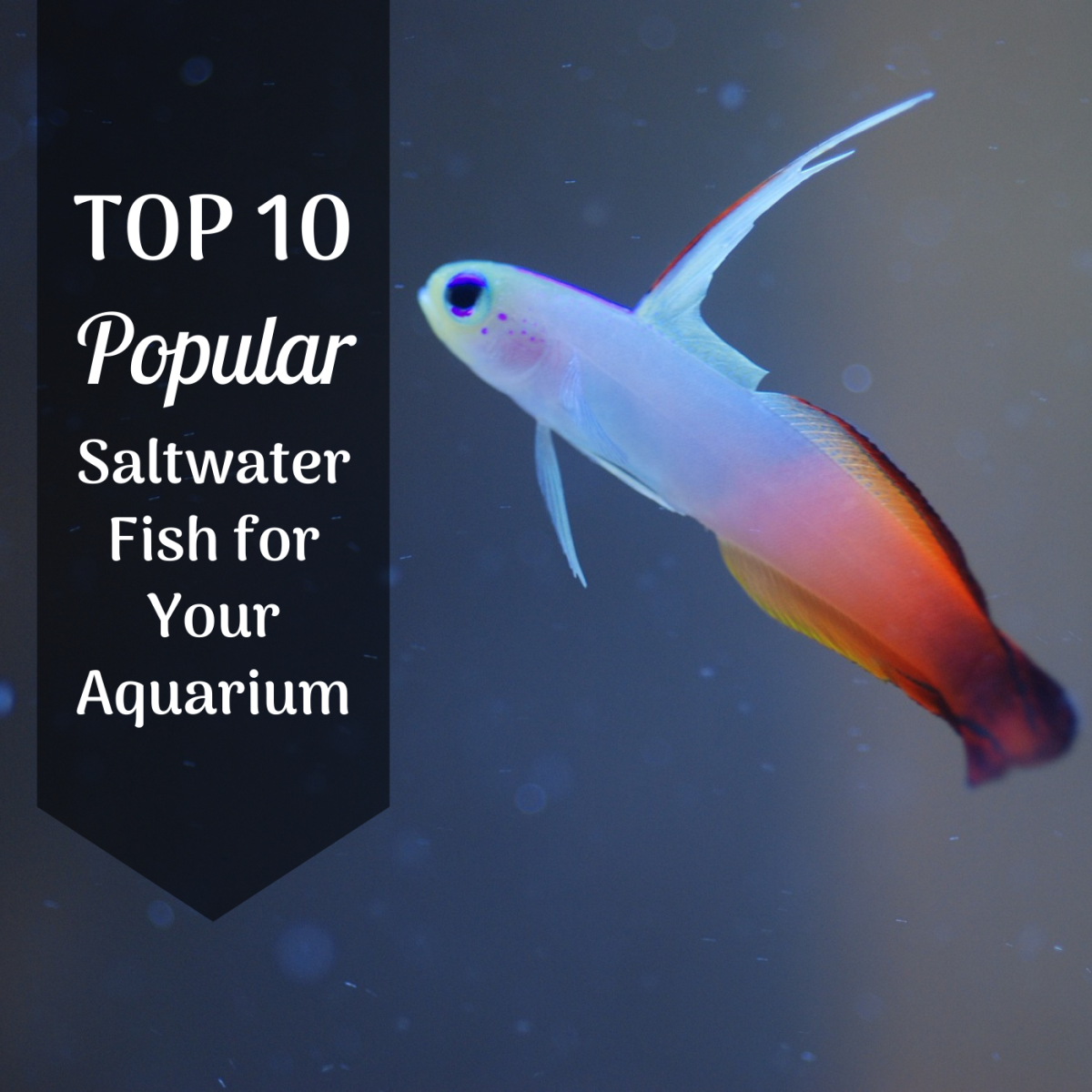 10 Great Saltwater Fish for the Home Aquarium