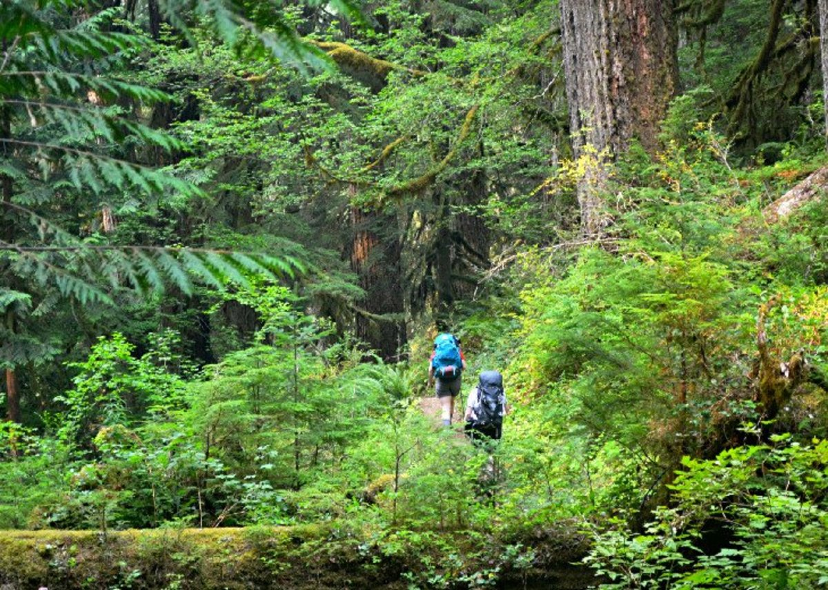 Olympic National Park is rain one of the most diverse national parks in the world, with ancient forests and a rugged coastline.