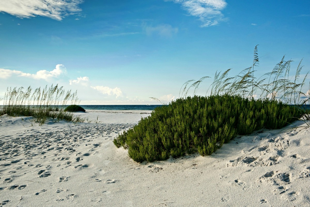 Beach plants and sand dunes are made for each others.