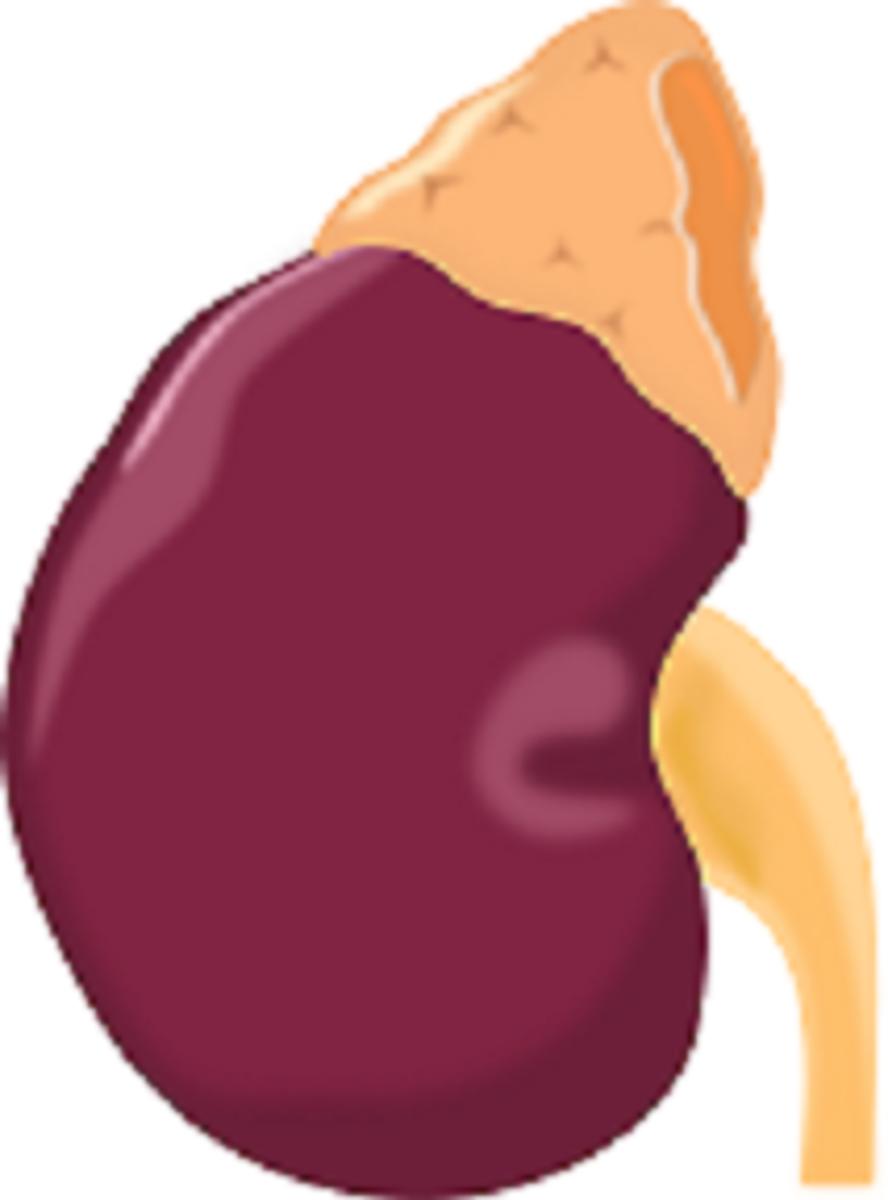 adrenal-depletionsupport