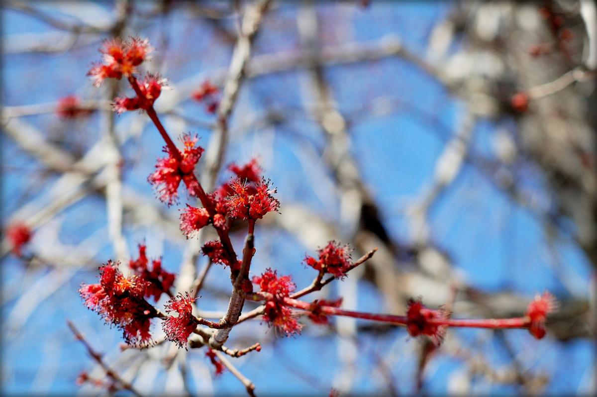 Beautiful spring scenery