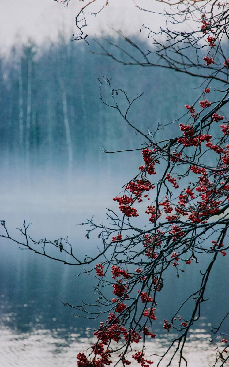 In Norse mythology, the rowan is the tree from which the first woman was made.