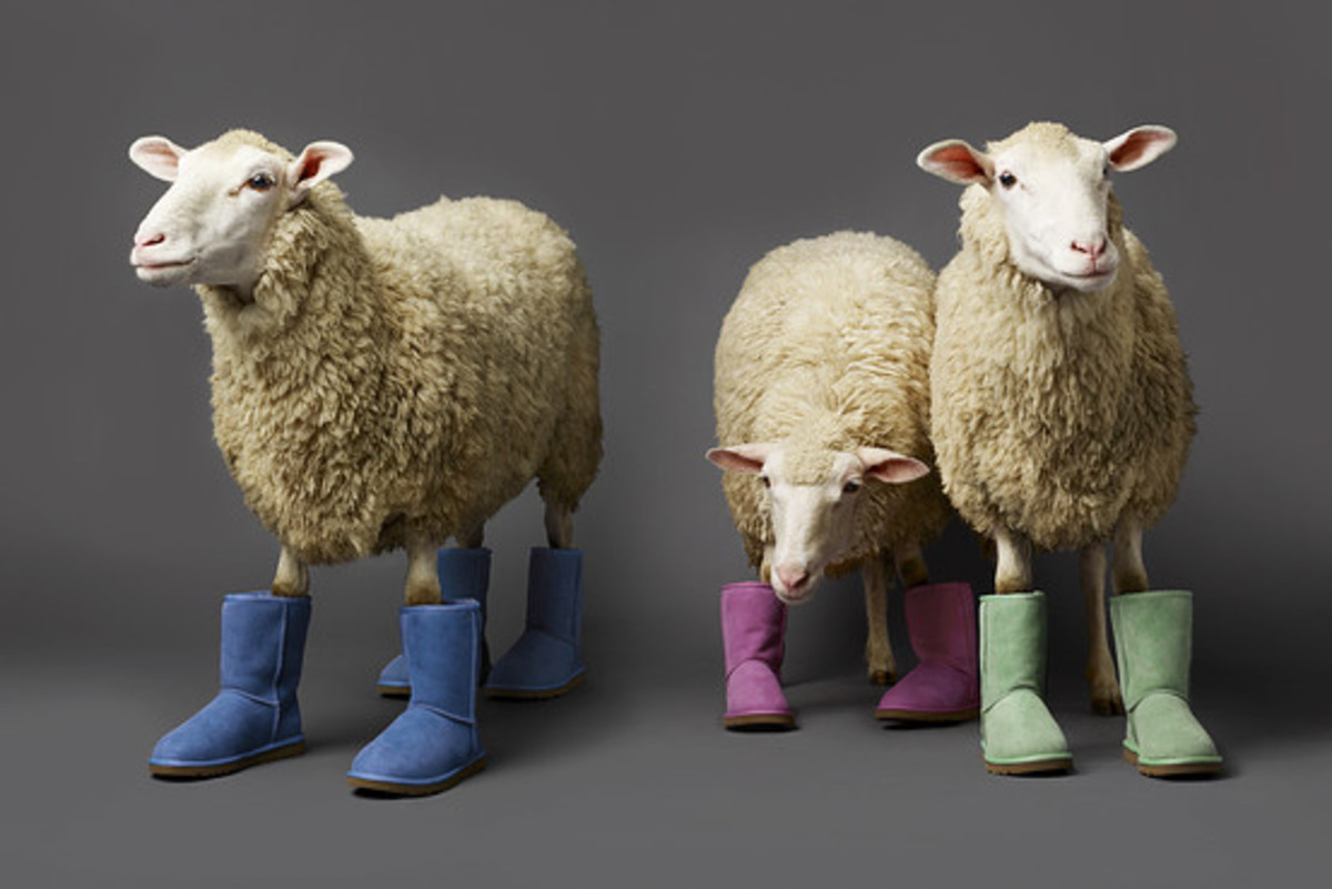 Sheep Skin UGGs photographed in different colors worn by three sheep