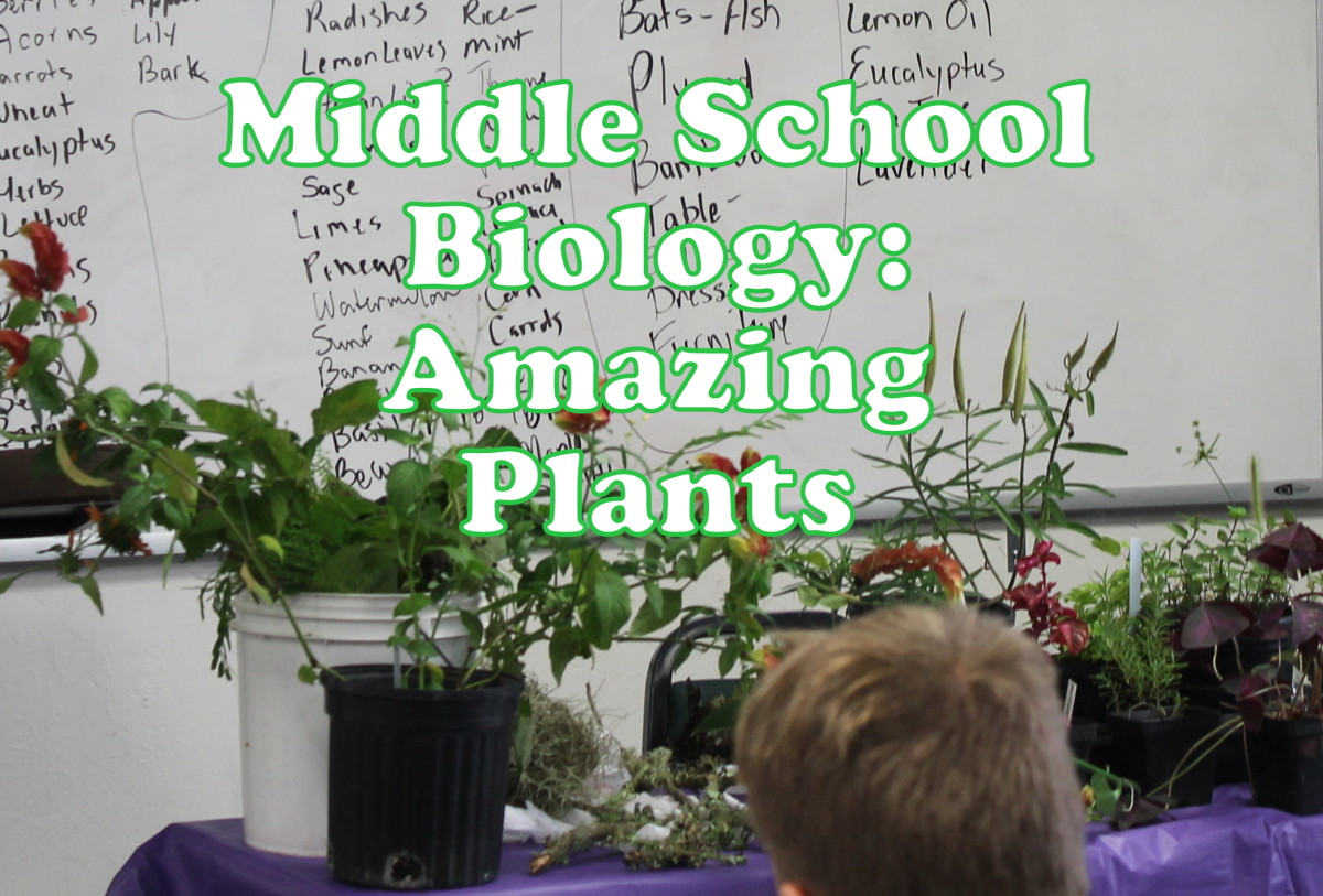 Middle School Biology Lesson on Amazing Plants