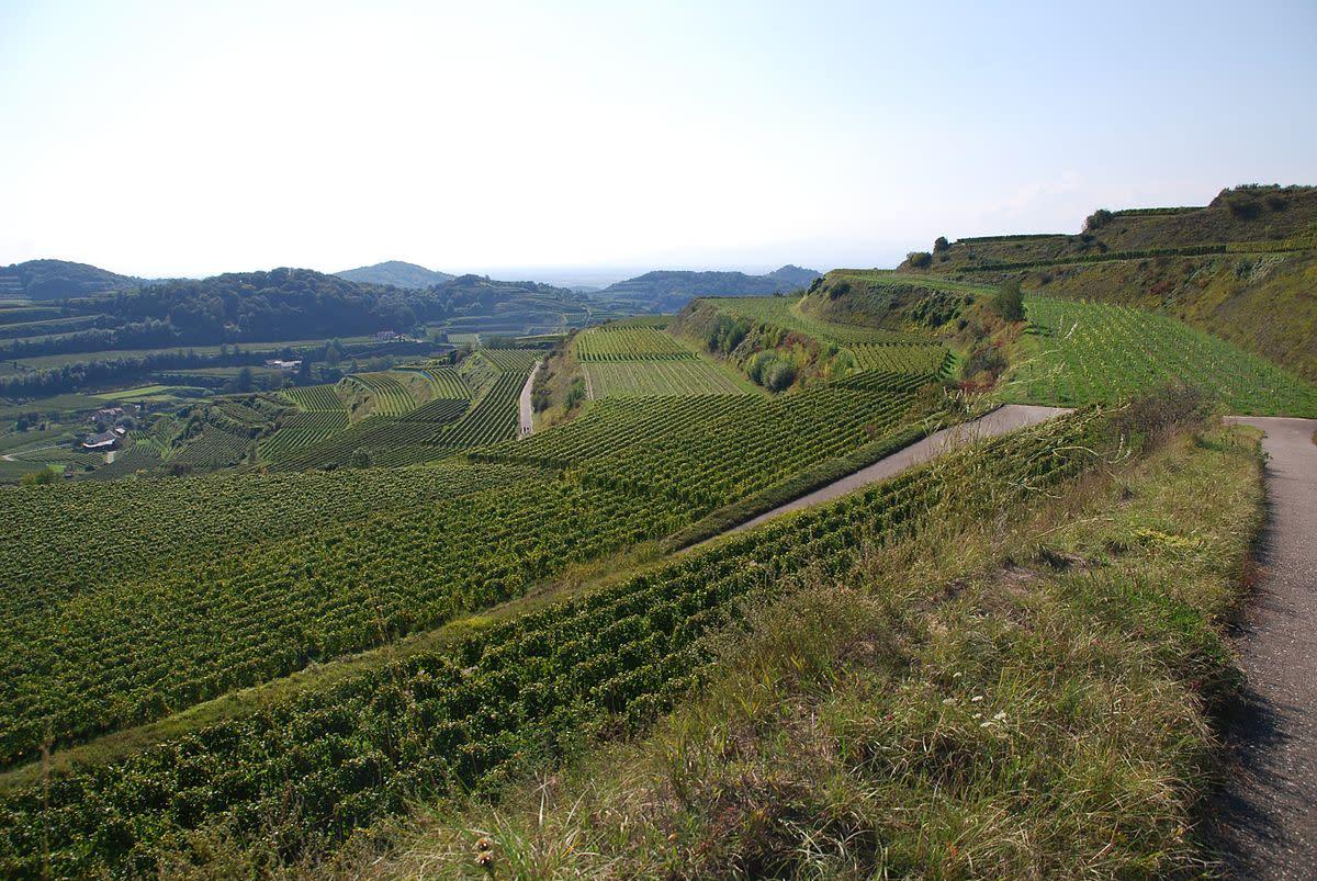 Kaiserstuhl terrain