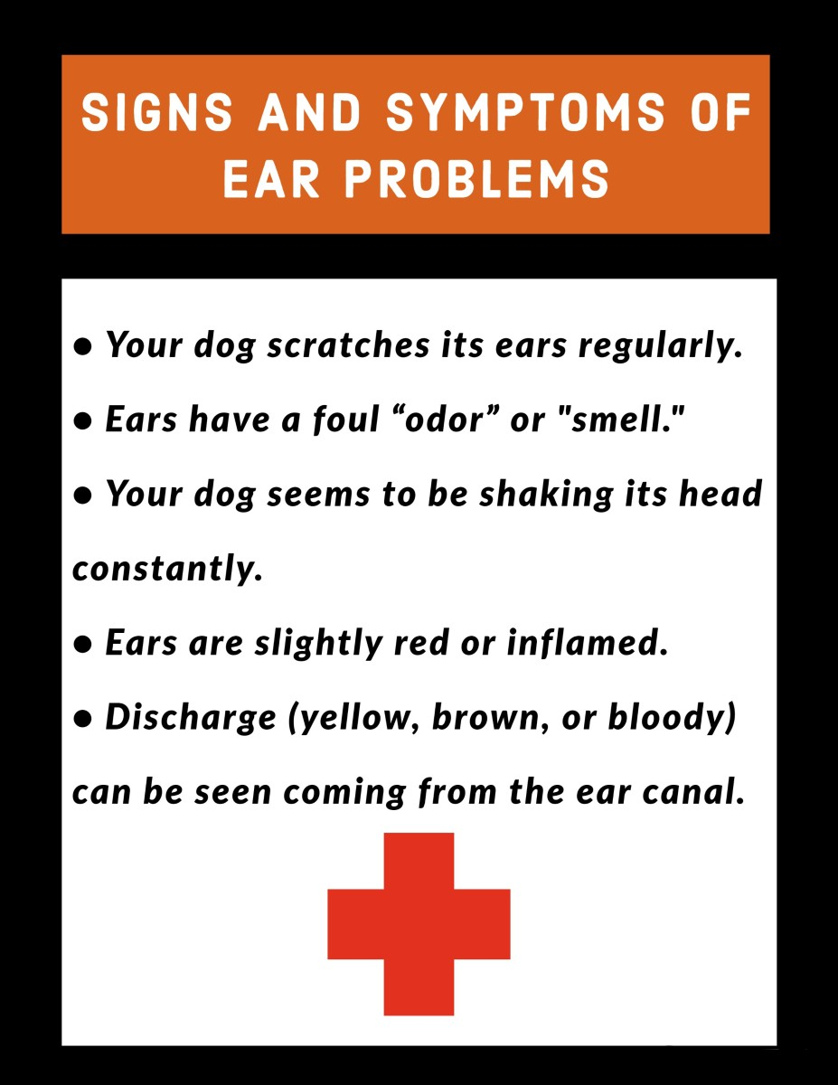 Signs and symptoms of ear problems with the Airedale Terrier.