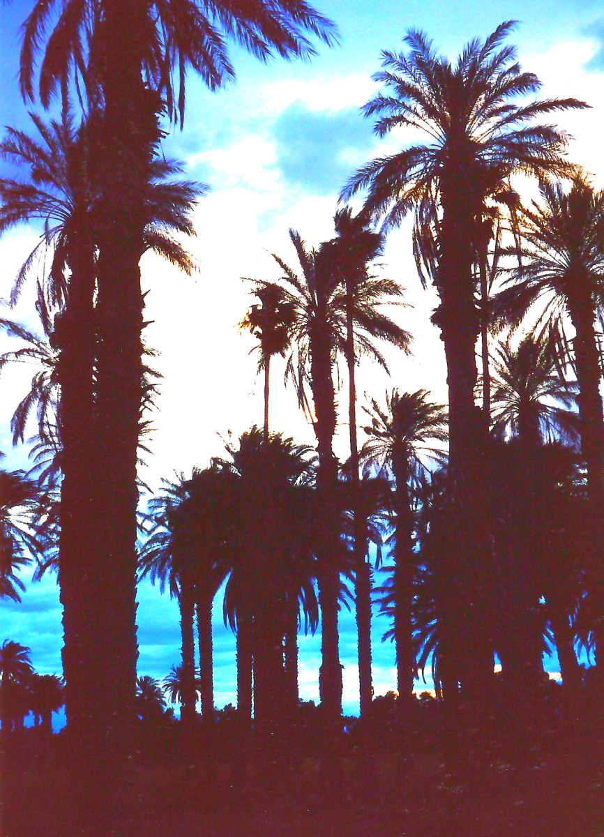 Look at those palm trees!