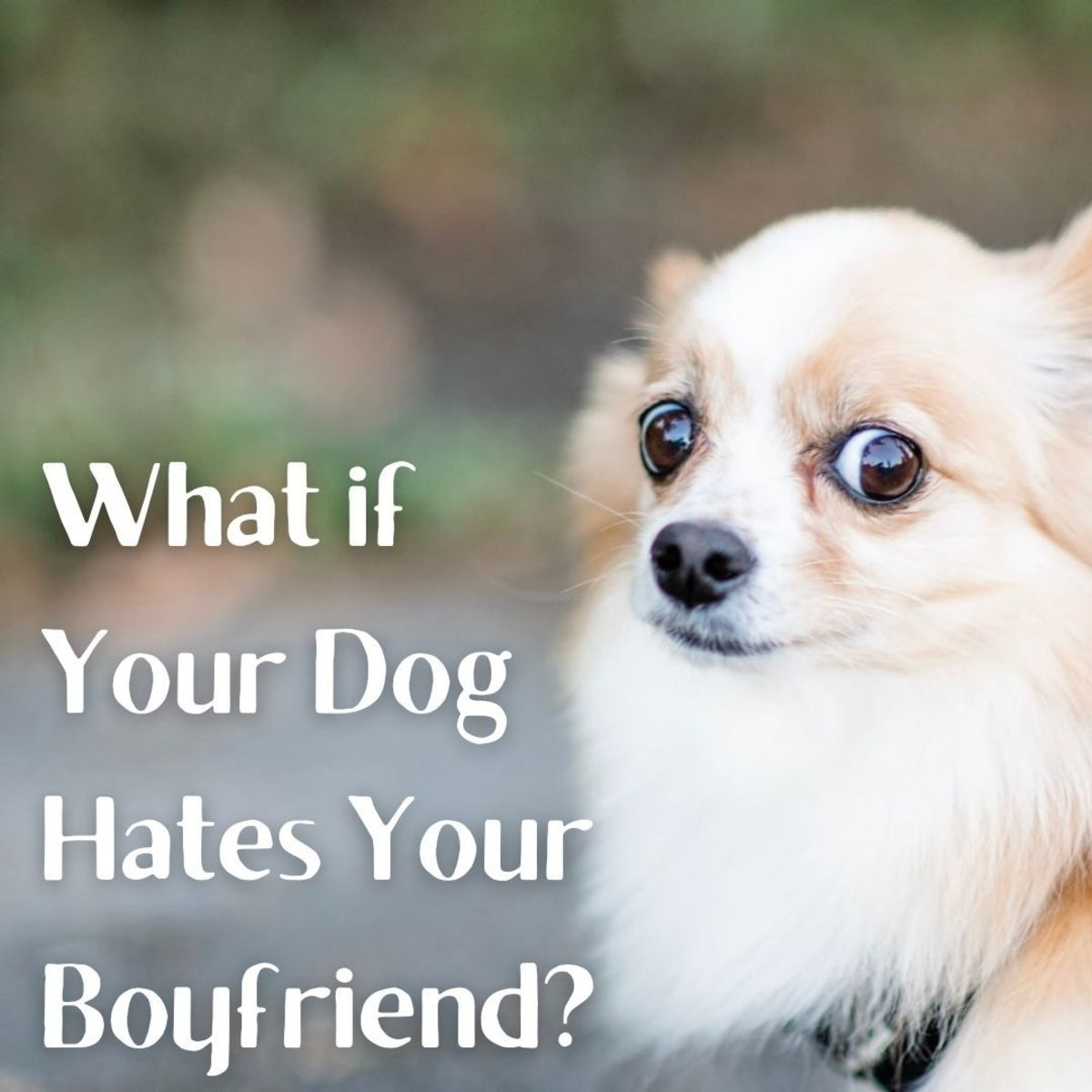Is your dog afraid of your husband or boyfriend?