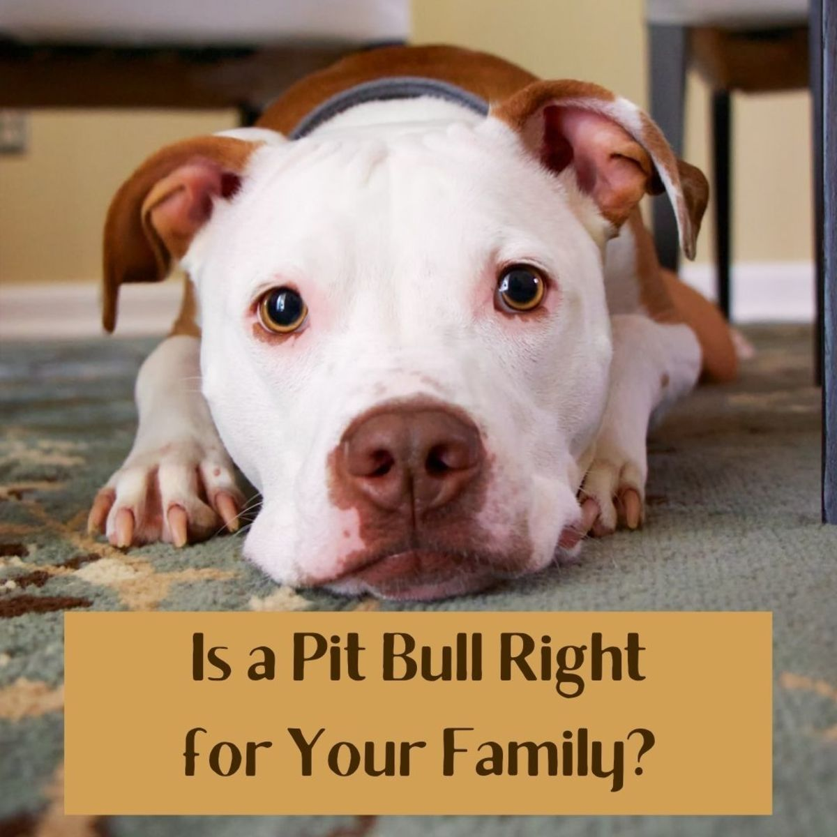 Many people who bring pit bulls home to their family aren't prepared for them.