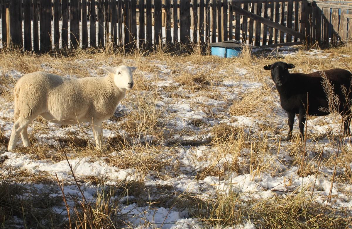 animals-in-winter
