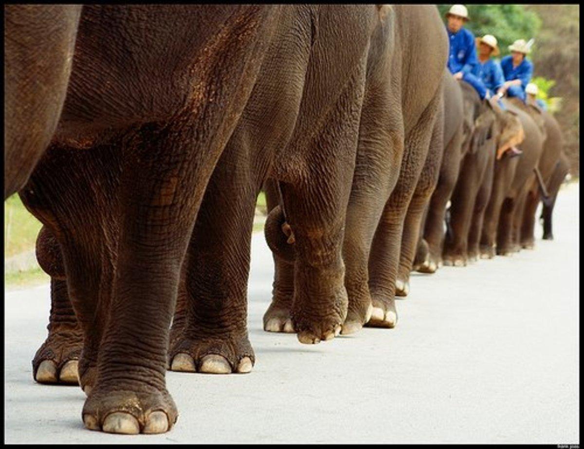 Thai Elephant Parade