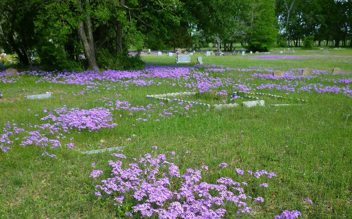 Masses of wildflowers drew our attention to noticing this little country cemetery near Retreat Hill Winery.