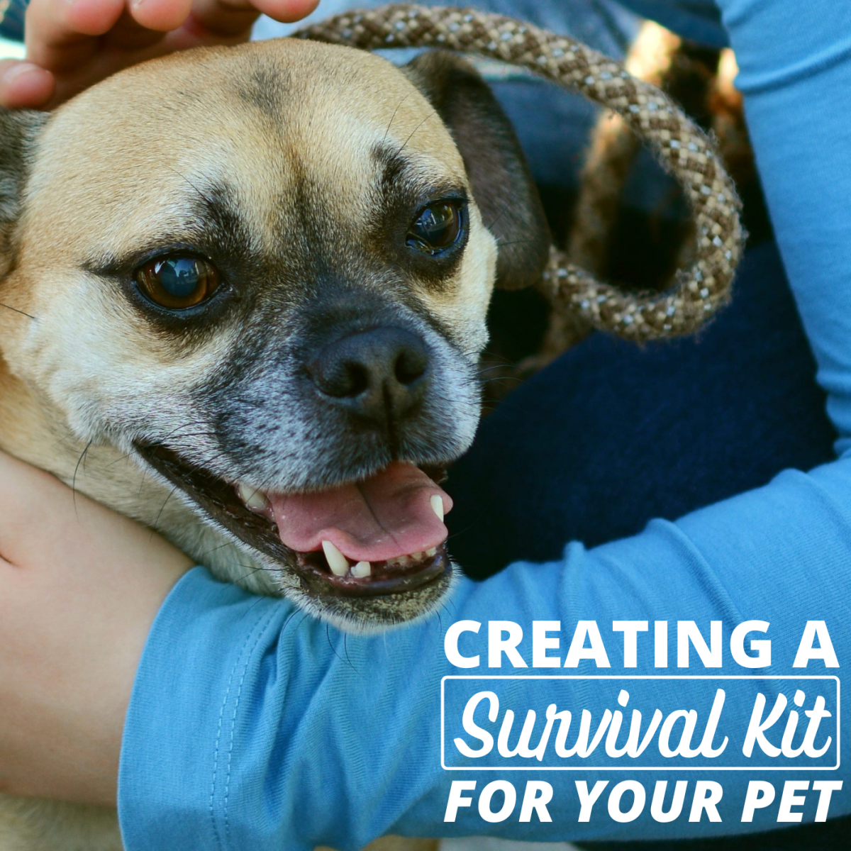 If disaster strikes and you need to move fast, having a survival bag for your pet can make things so much easier.