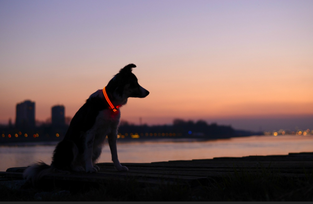 A glowing LED dog collar is a good idea to include in your pet bugout bag.