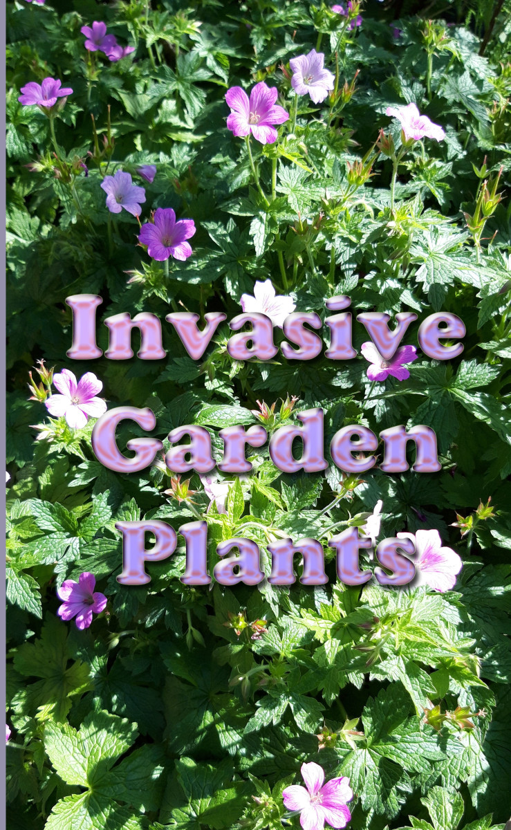 Invasive Garden Plants