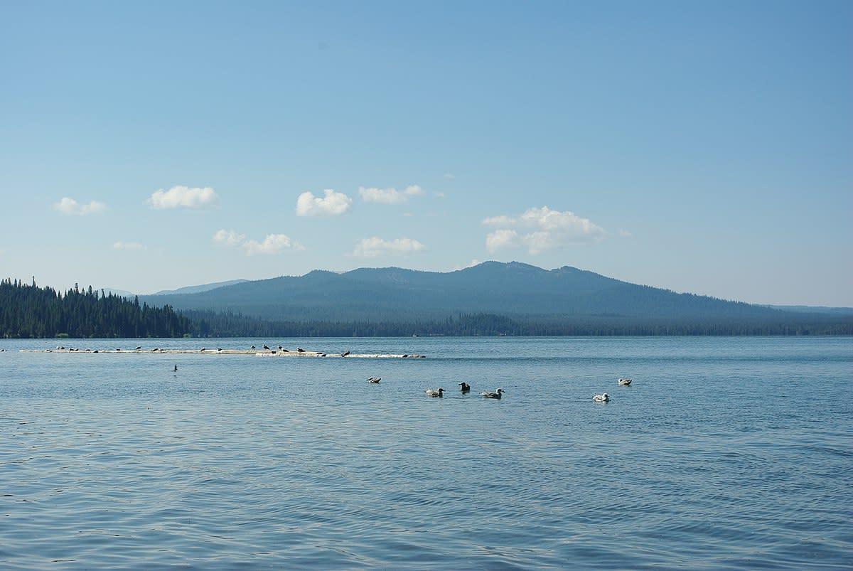 Ducks on Diamond Lake