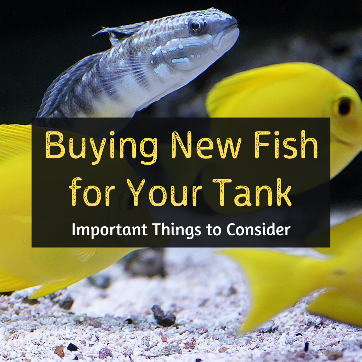 What to Consider Before Buying New Aquarium Fish
