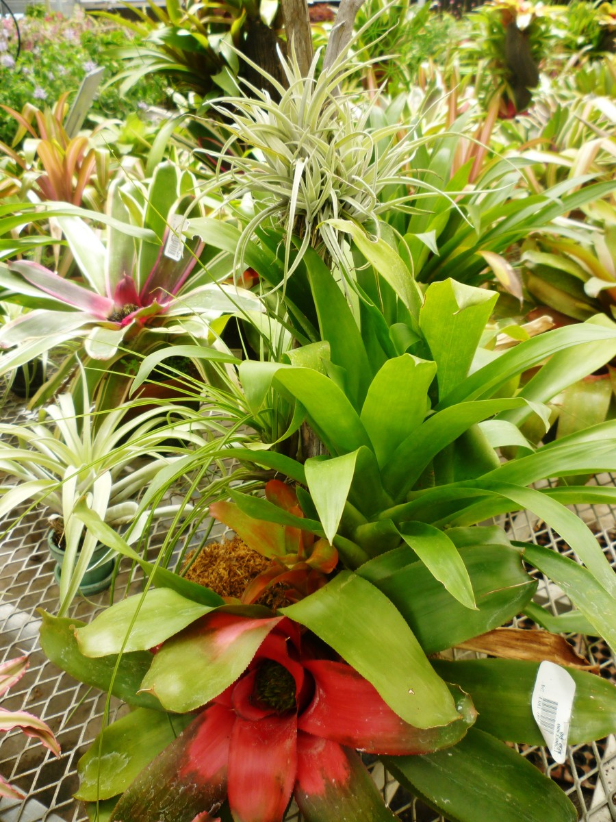 Plants available for sale at Brookwood Community