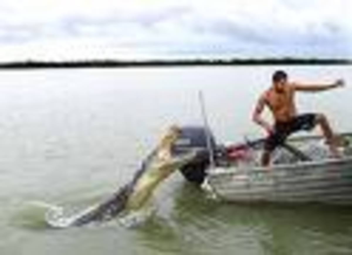 """A narrow escape.  Tourist said he was """"teasing"""" croc for a photo, when it leapt out of the water at him.     Mirror photo."""