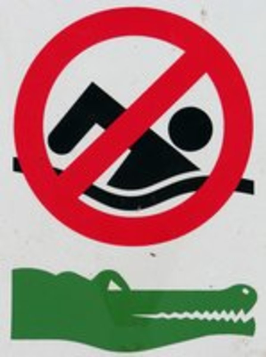 Danger of Crocodile Attack Increasing: