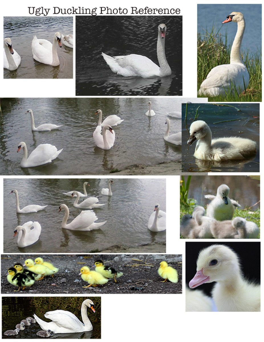 Photo References for The Ugly Duckling
