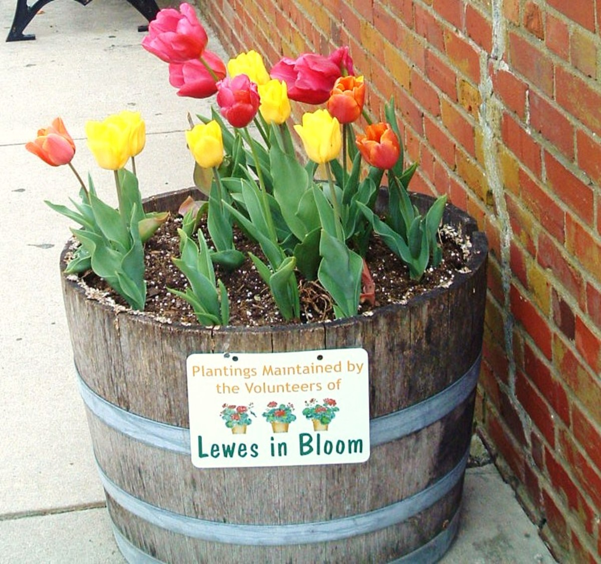 """Earth laughs in flowers."" ~Ralph Waldo Emerson. Buying bulbs is an investment in future happiness."