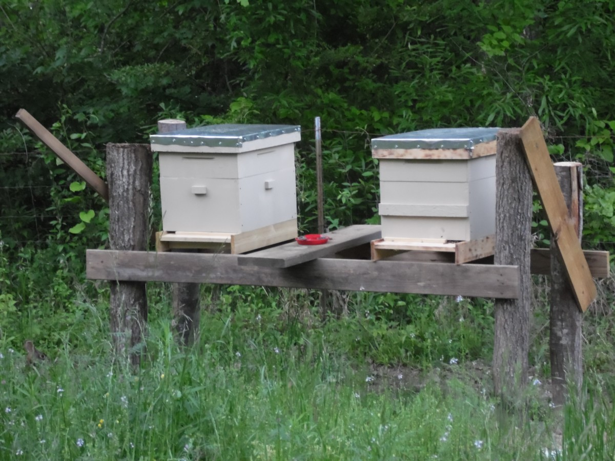 Honey Bee HIves