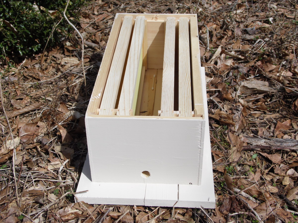 Small honey bee trap holds up to five medium frames