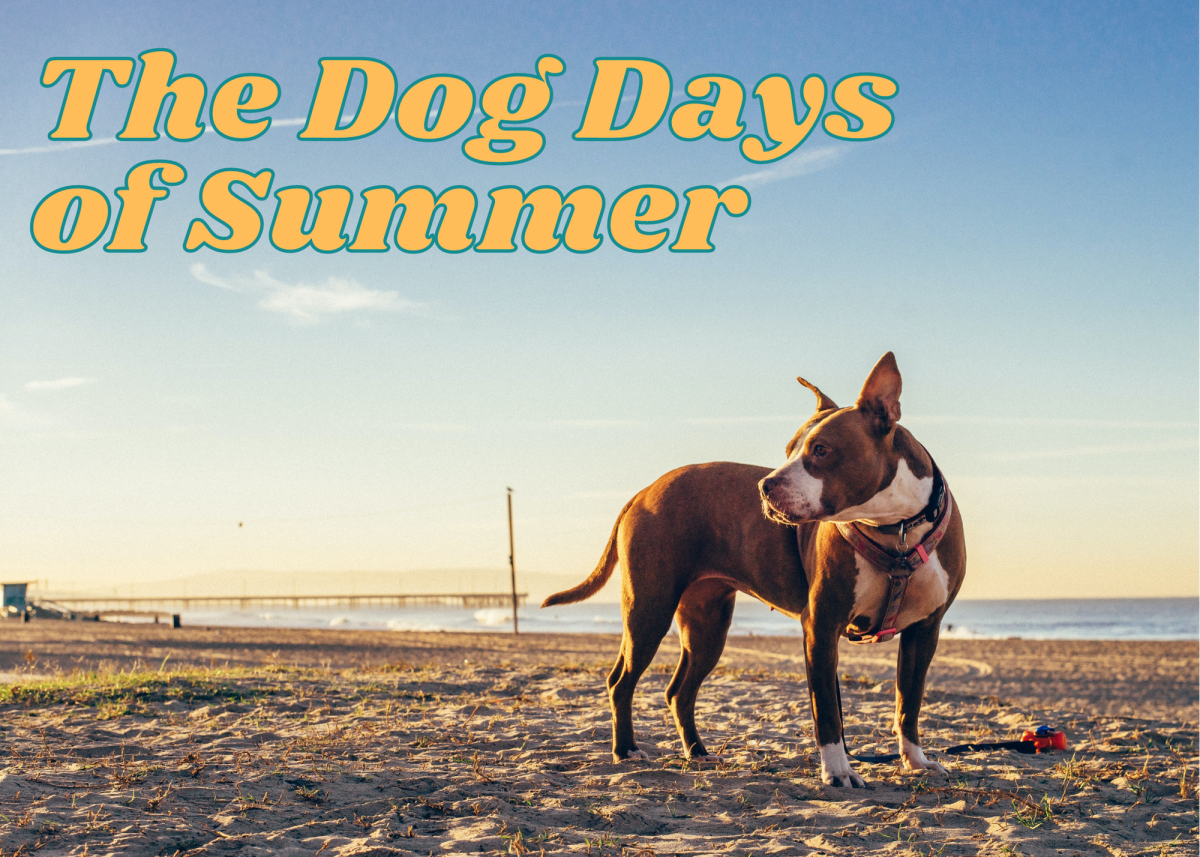 The dog days of summer are the hottest of the season.