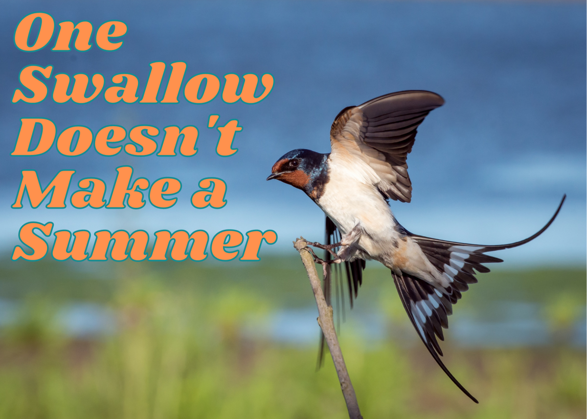 Saying one swallow doesn't make a summer is sort of like saying one bad apple doesn't spoil the bunch.