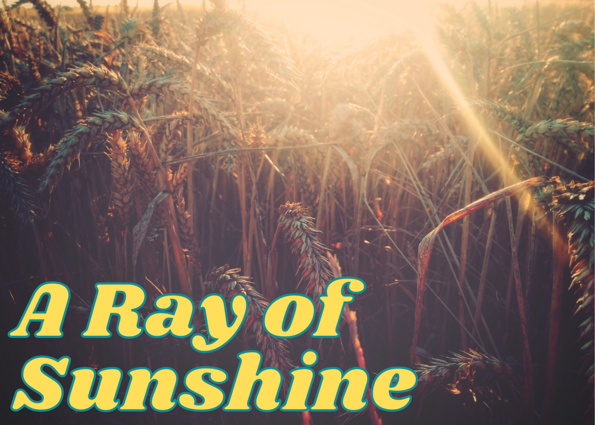 A ray of sunshine is a little something that makes you happy.