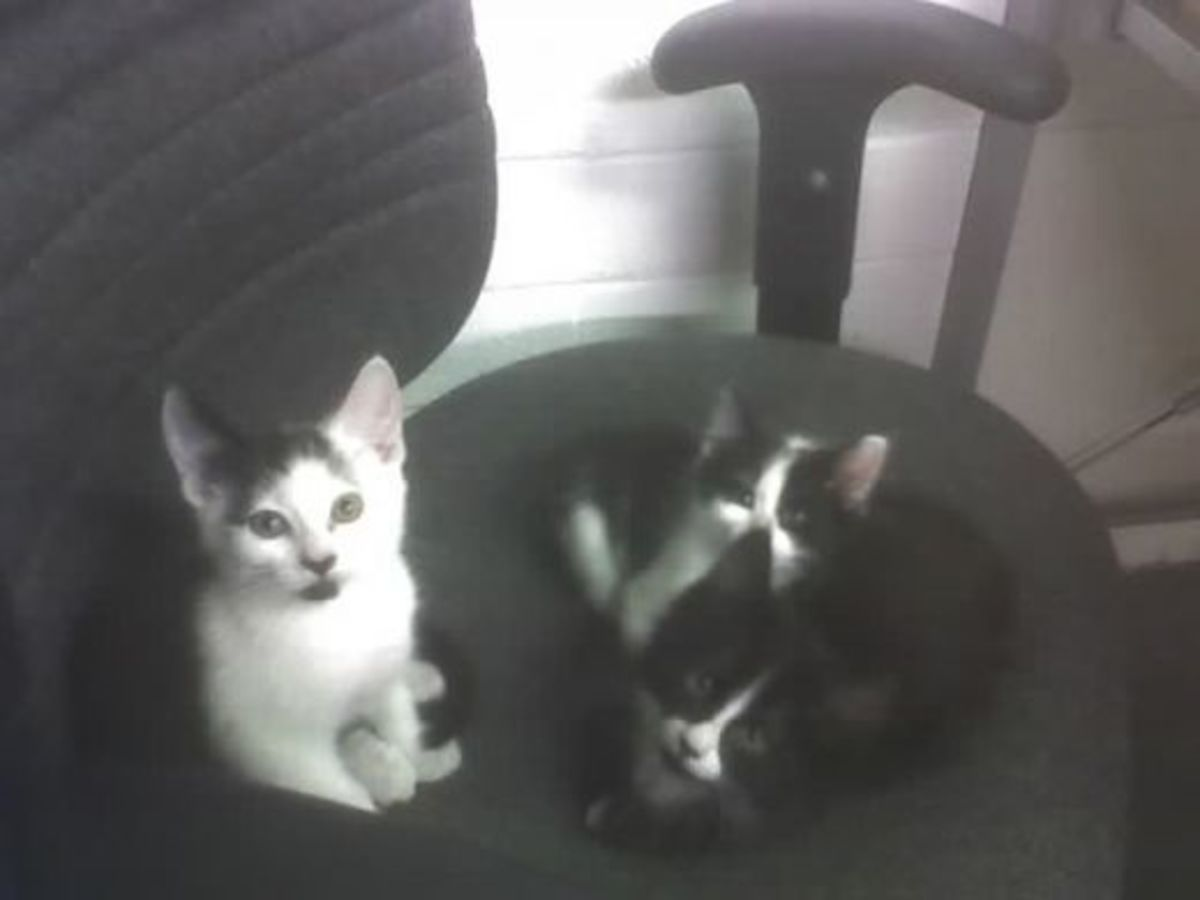 The 3 Hooligans - they were so cute and just so much fun as kittens