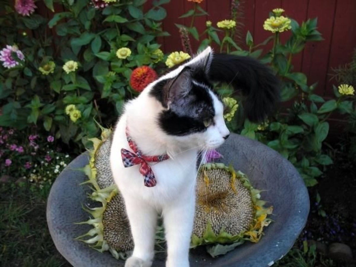 Our cat Perdy loved the garden in our yard. My sister in law Kim took this picture one year. Beautiful- wasn't she?