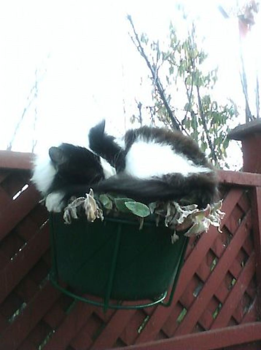Perdy again in her plant