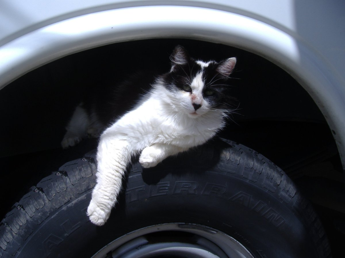 This is one of the last photos of took of my cat before she got killed. Unfortunately, her penchance for louging in wheel wells may have got her killed.
