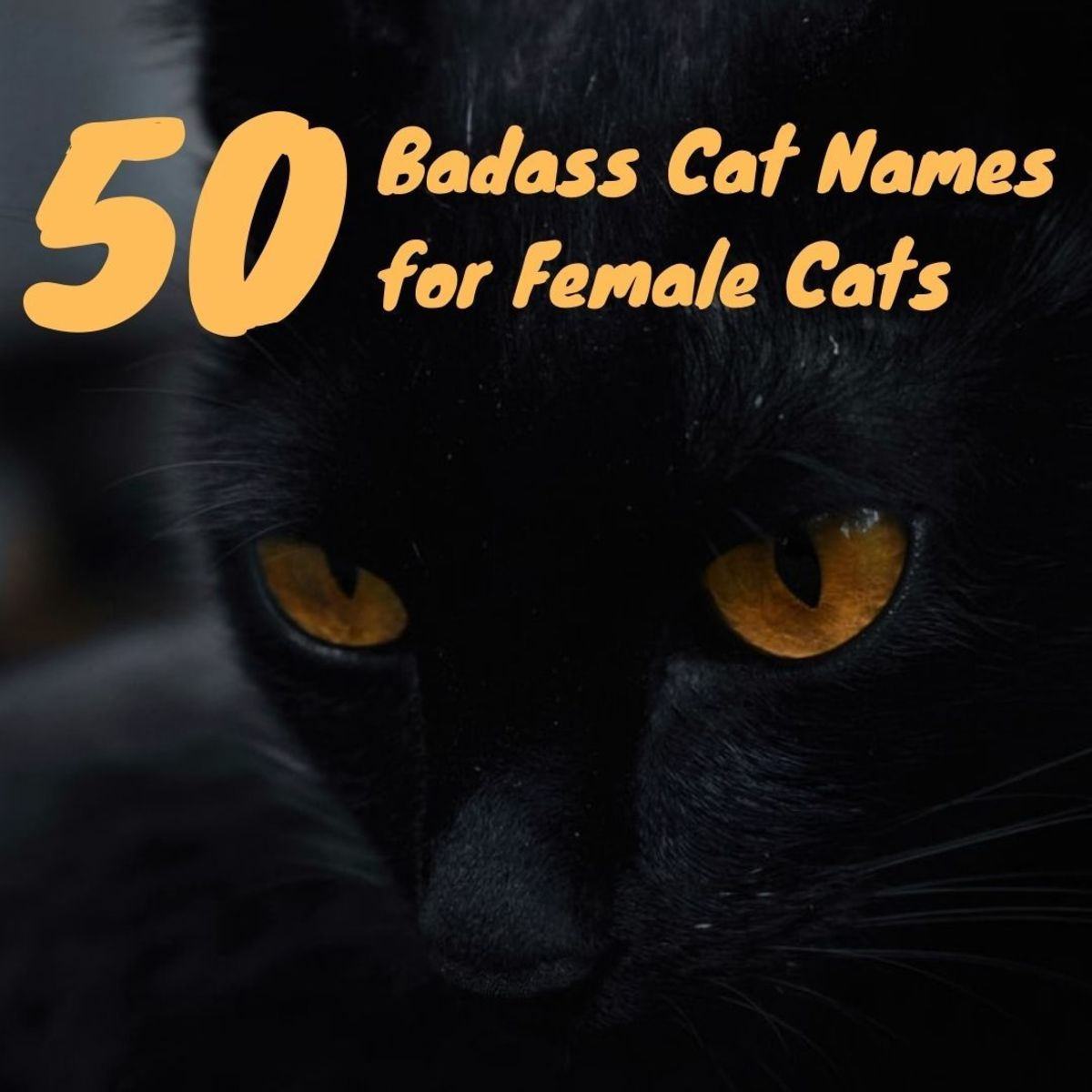 Killer Names for Cats