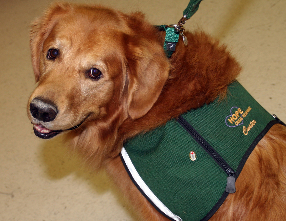 Therapy dogs and improving emotional states