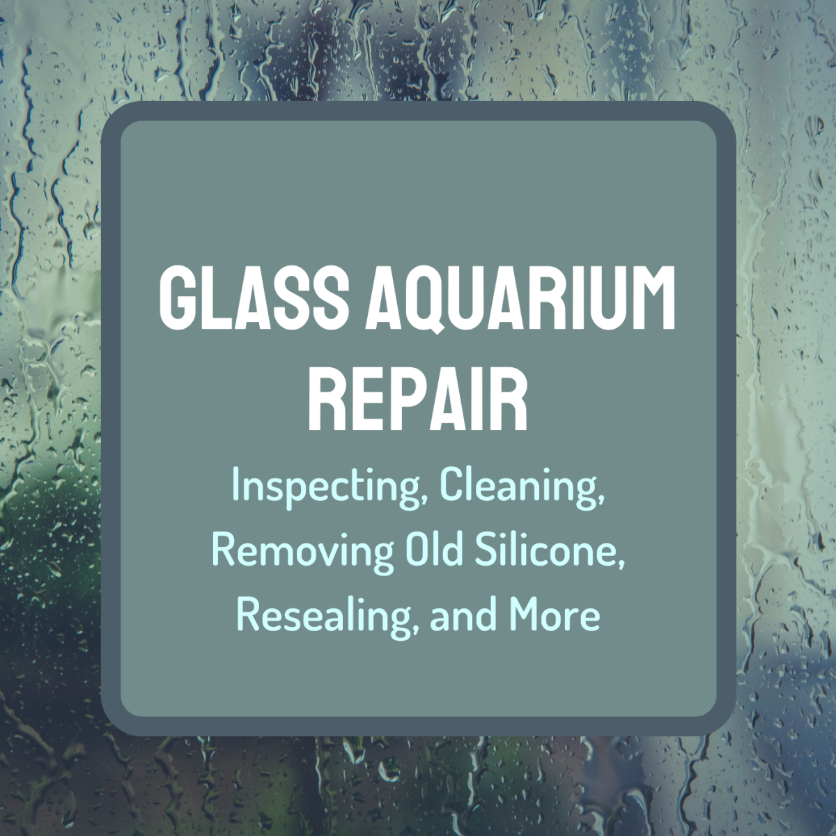 Learn how to refurbish old all-glass aquariums and make them as good as new.