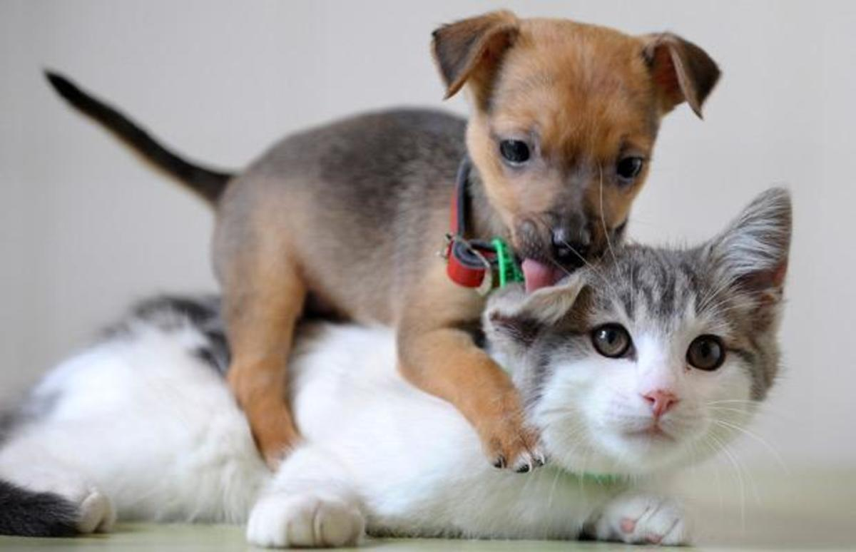 Top 10 Dogs that Get along with Cats