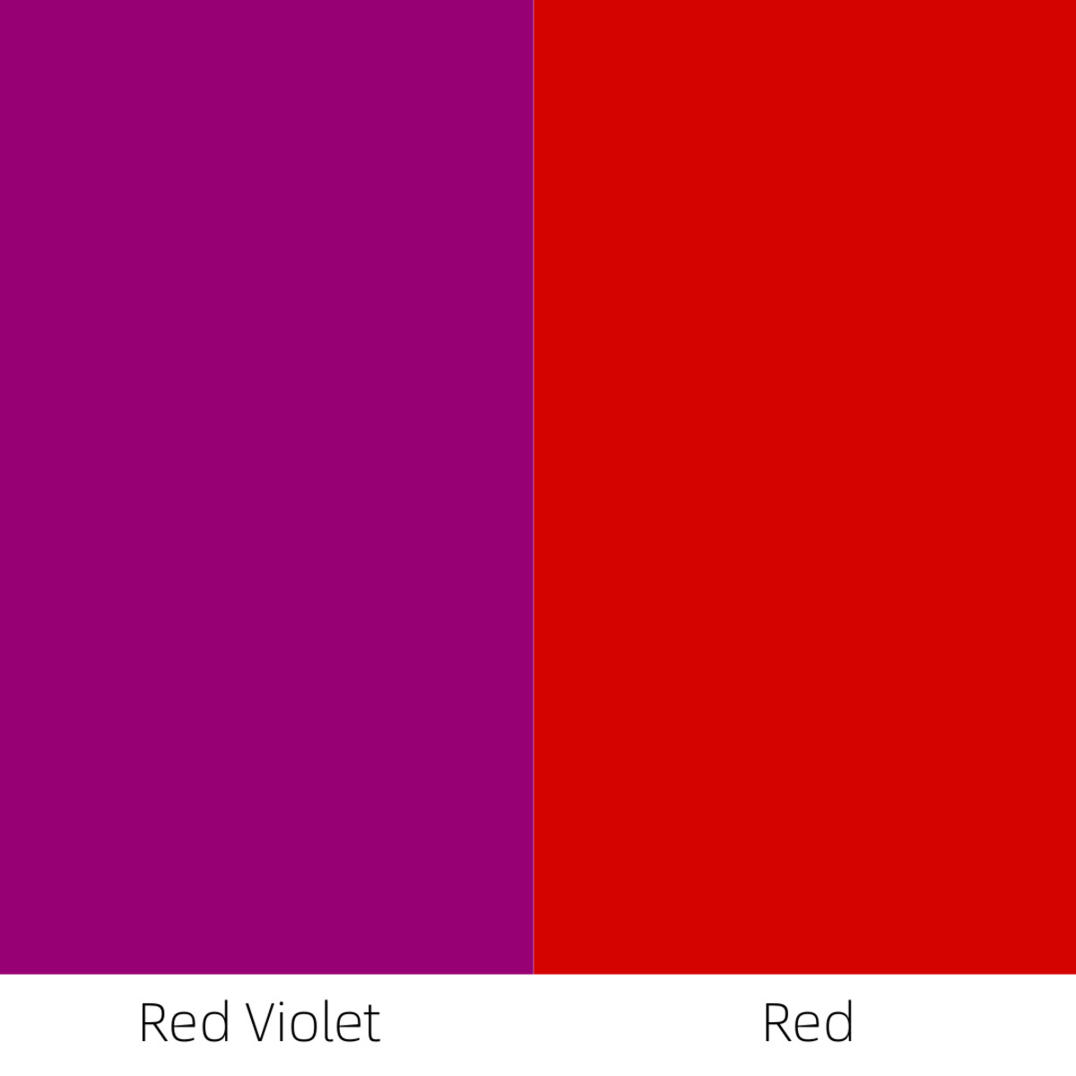 When you paint red-violet next to red, then the red-violet appears cooler, because it contains some blue.