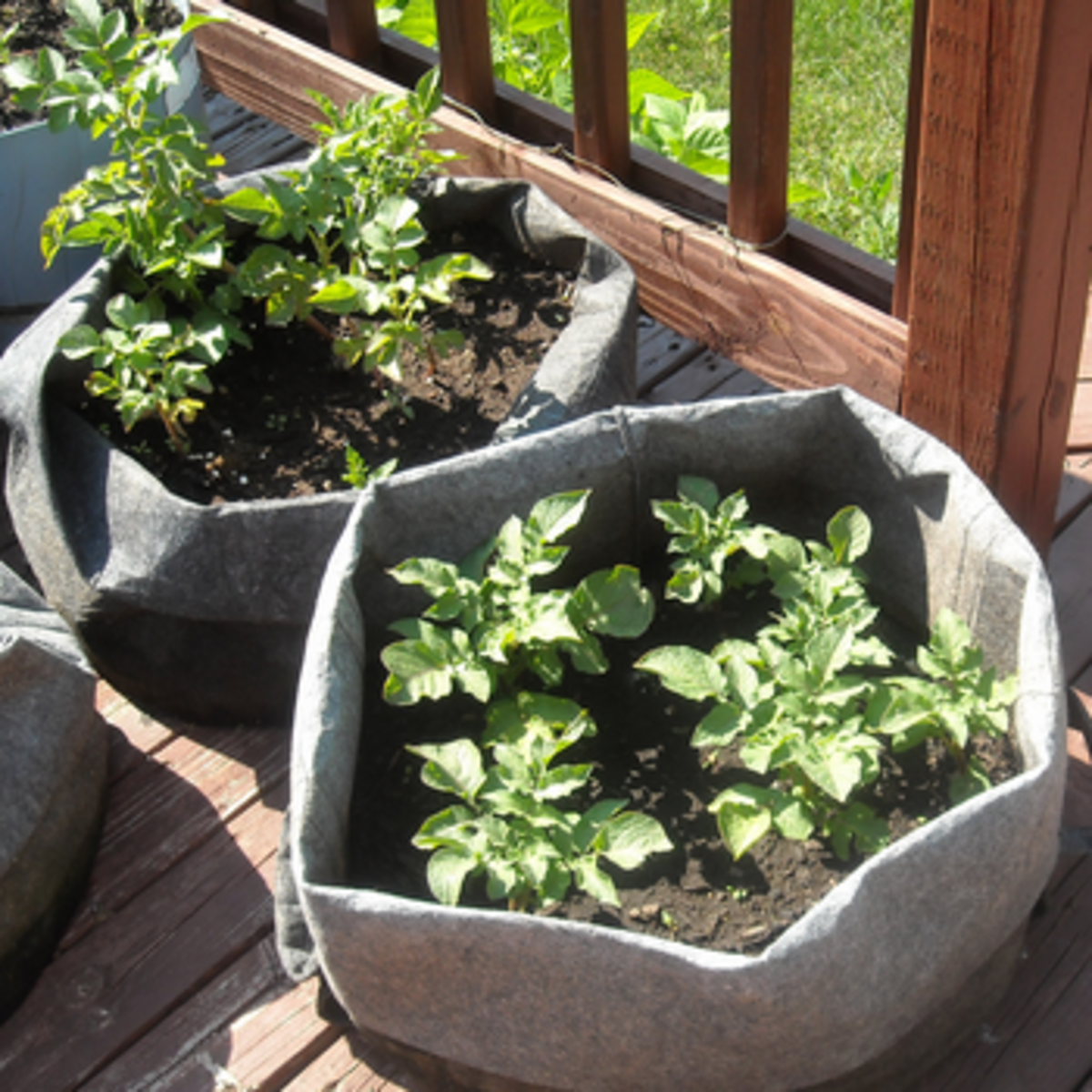 Smart Pots - Fabric Planting Bags Grow Potatoes Easily!