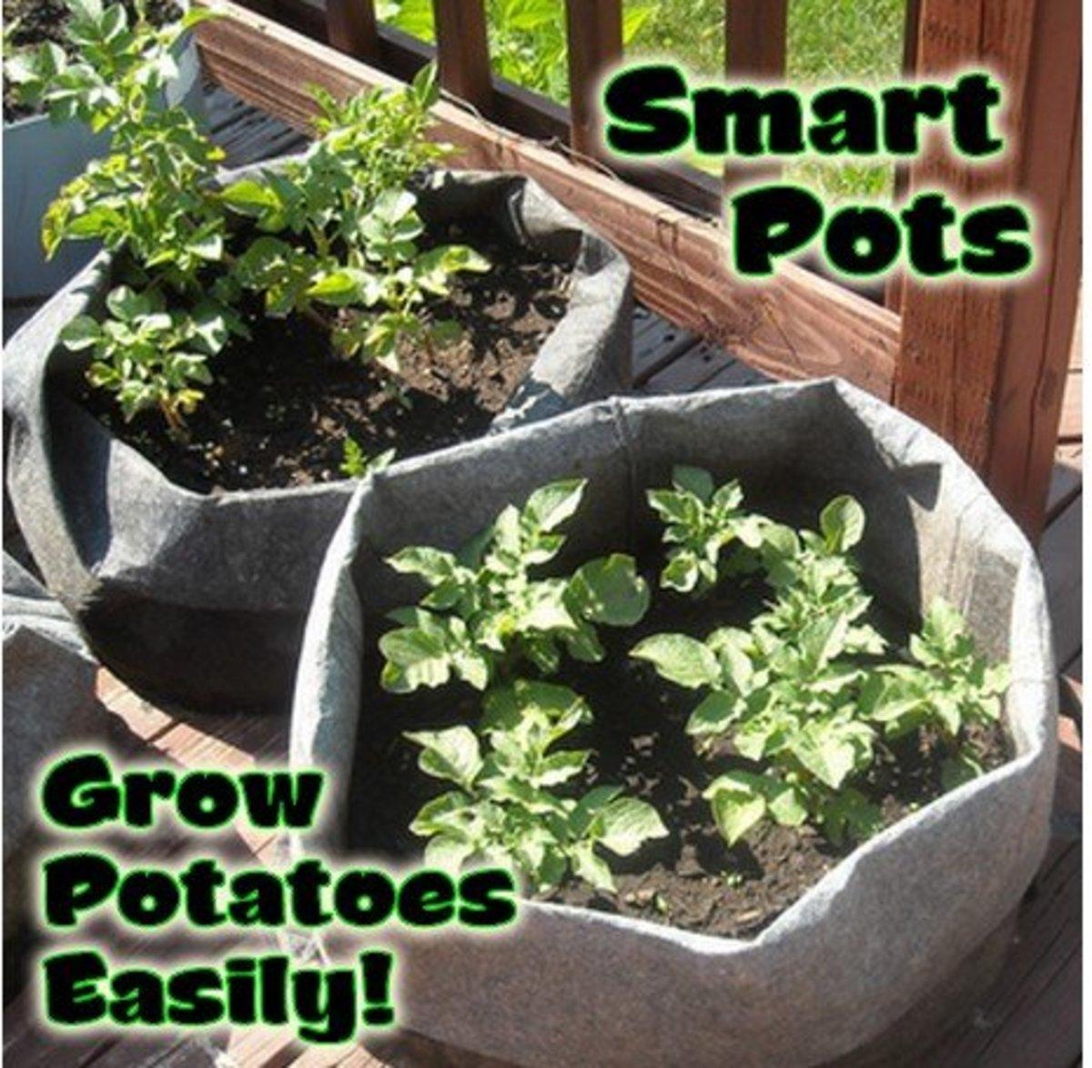 Smart Pots - Fabric Planting Bags Grow Potatoes Easily!